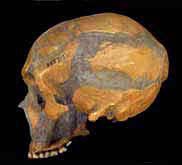 http://www.goldentime.ru/im_fossils/lemoustier.jpg