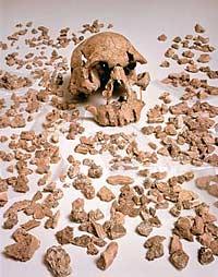 фотография черепа ER 1470